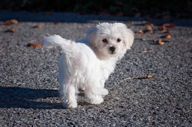 dog-1123026_1920